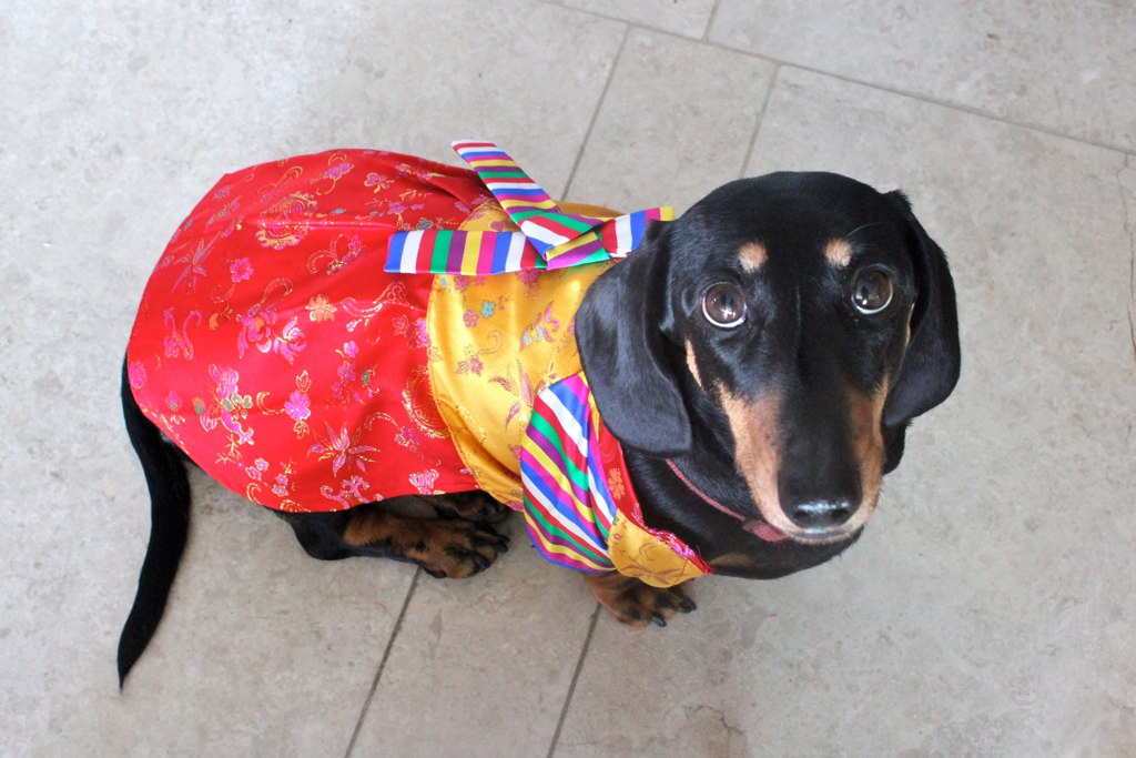 Cool Costume Ideas For Your Dog