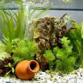 Aquarium Tips - Using SodaStream As CO2