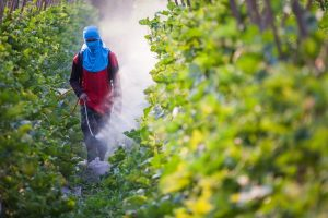 Is Commercial Pest Control Safe If Your Wife Is Pregnant?