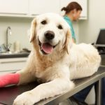 Why You Need Insurance For Your Pet
