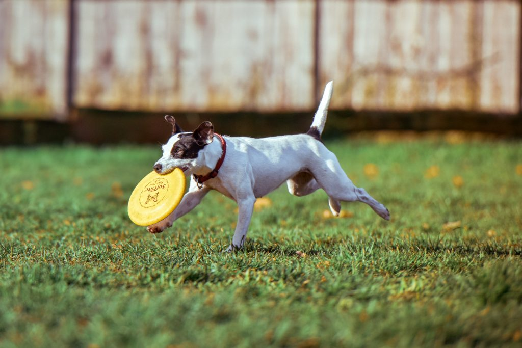 Creative and Fun Ways To Play With Your Dog At Home