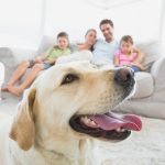 Helping Your Family Through The Loss Of A Pet