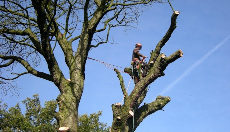 How To Hire A Tree Surgeon And Save Life?