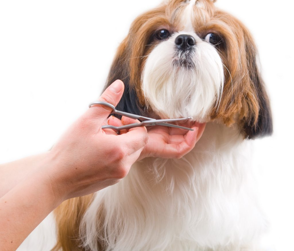 10 Reasons Why Your Dog Is Not Eating