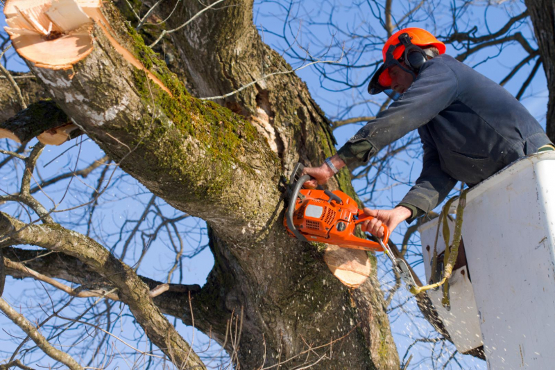 Reasons To Hire Tree Surgery Harrow Services