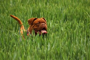 6 Etiquette Rules When Meeting A New Dog