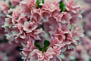 Advantages Of Planning An Early Valentine's Day Flowers Delivery