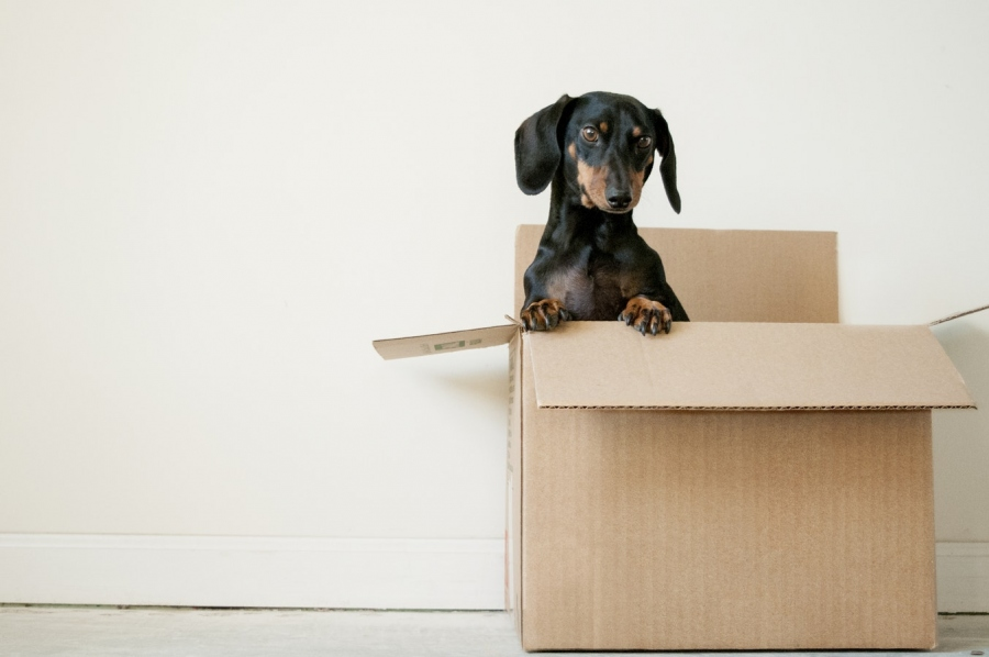 Top Tips For A Pain Free House Move