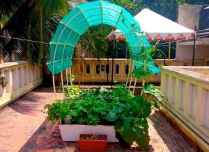 Growing and Developing Your Very Own Garden