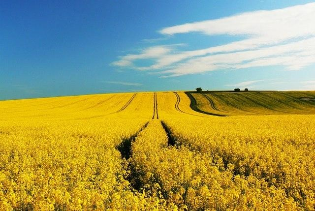 Everything You Need To Know About Crop Insurance