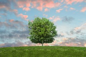 Simple Things You Can Do To Reduce Your Carbon Footprint