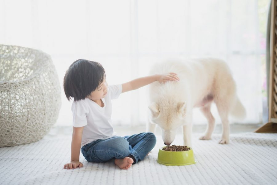 Common Ways Your Kids and Your Pets Could Be Damaging Your Home